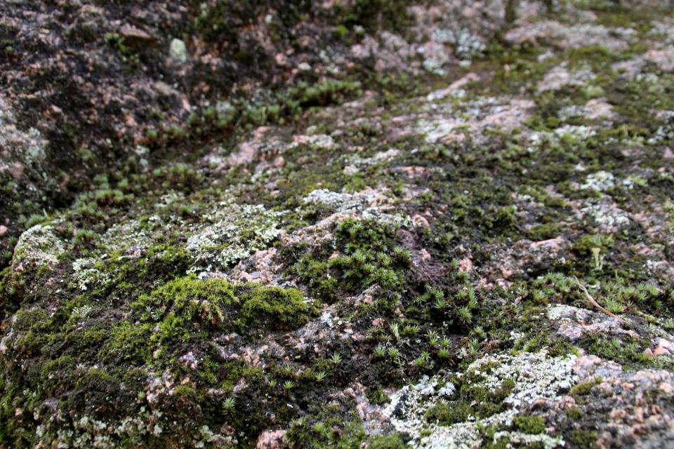 Камень Гамбургсгорд (Hamborggårdstenen), Бэкке, Дания. Фото 28 июл. 2021