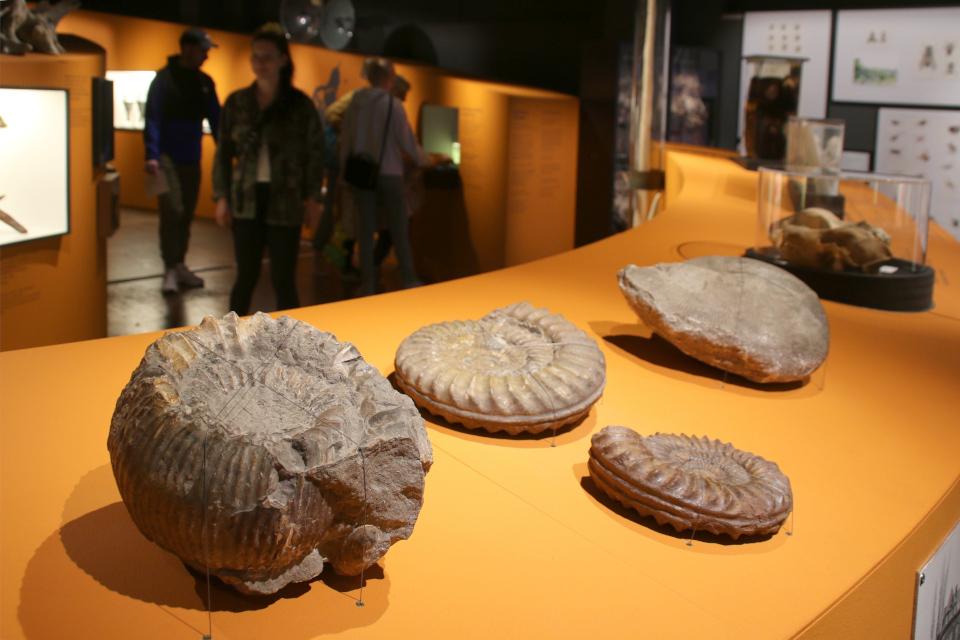 Раковины моллюсков. Музей естественной истории Орхус, Дания (Naturhistorisk Museum Aarhus). Фото 29 авг. 2021