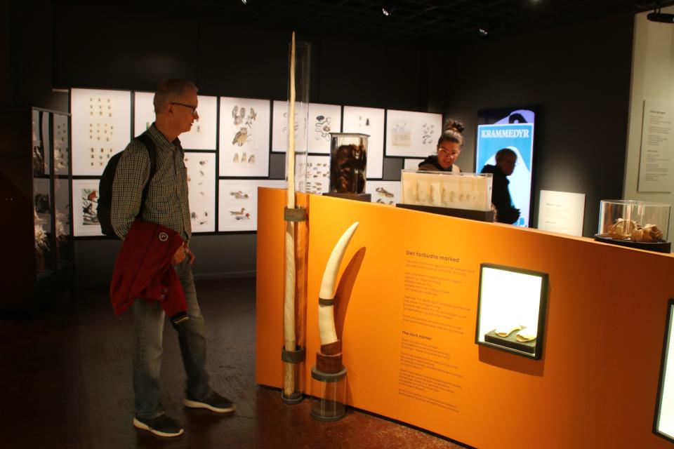Музей естественной истории Орхус, Дания (Naturhistorisk Museum Aarhus). Фото 29 авг. 2021