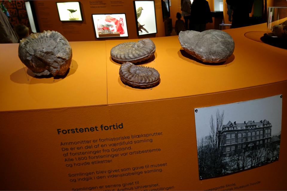Læssøesgade Skole. Музей естественной истории Орхус, Дания (Naturhistorisk Museum Aarhus). Фото 29 авг. 2021