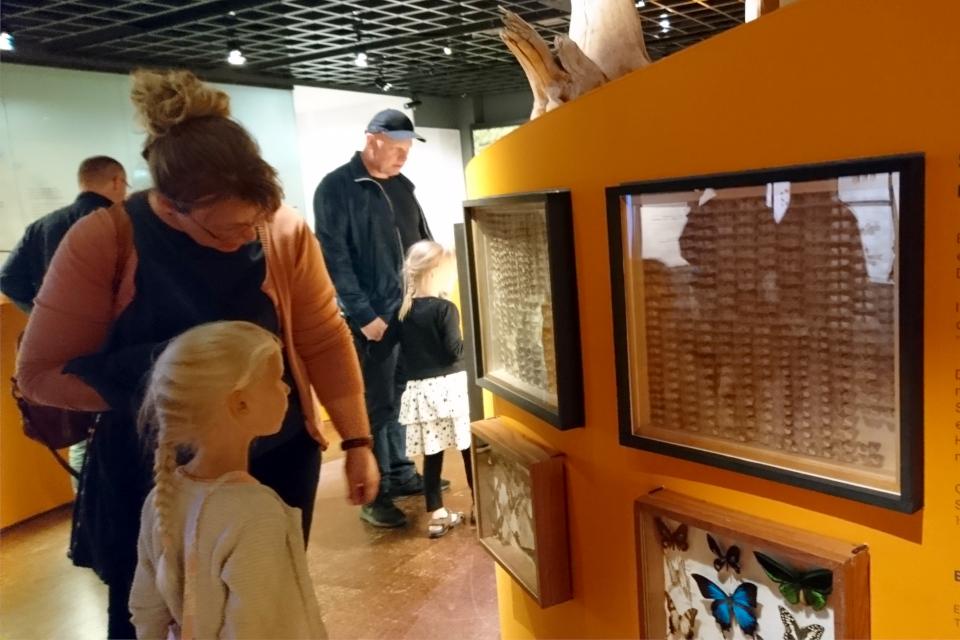 Бабочки. Музей естественной истории Орхус, Дания (Naturhistorisk Museum Aarhus). Фото 29 авг. 2021