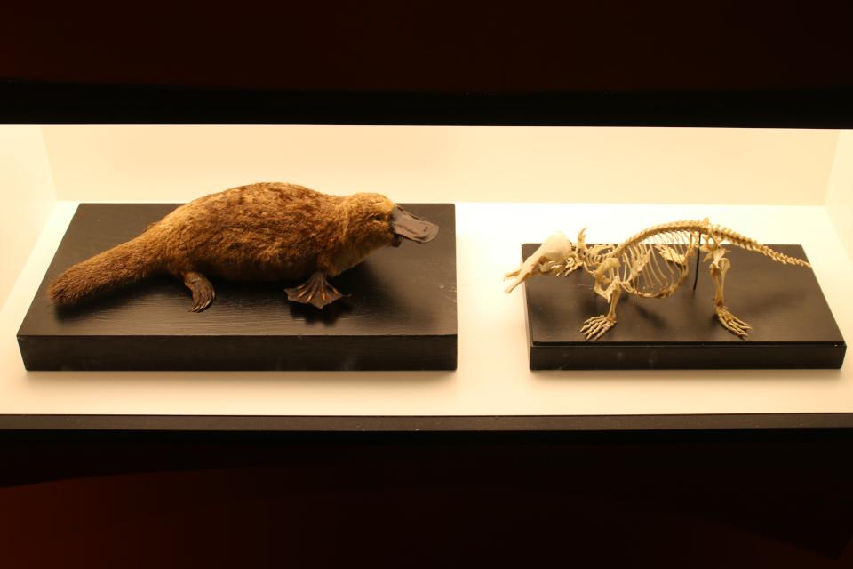 Уктонос. Музей естественной истории Орхус, Дания (Naturhistorisk Museum Aarhus). Фото 29 авг. 2021
