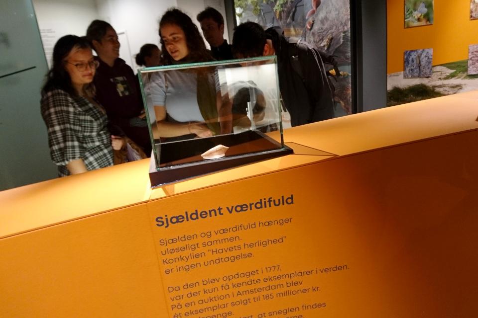 Тропическая раковина. Музей естественной истории Орхус, Дания (Naturhistorisk Museum Aarhus). Фото 29 авг. 2021