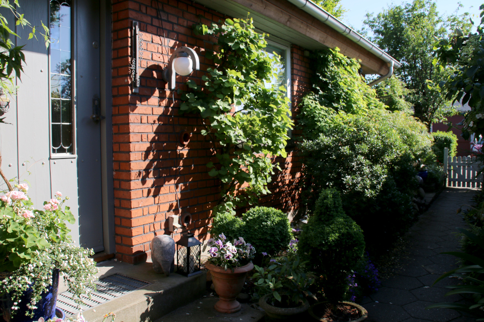 Церцис. Сад Йенс Кёэ (Jens Kjøge have), Ørnegårdsvej 17, Хойбьерг, Дания. Фото 30 мая 2018