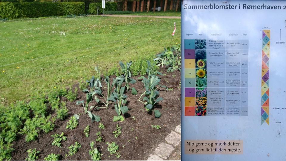 Съедобная клумба в парке Рёмер 2021 - табличка с планом и списком растений. Фото 27 мая 2021, г. Орхус, Дания