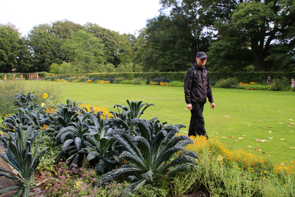 Съедобные декоративные растения на клумбе в парке Рёмер 2021, г. Орхус, Дания. Фото 9 авг. 2021