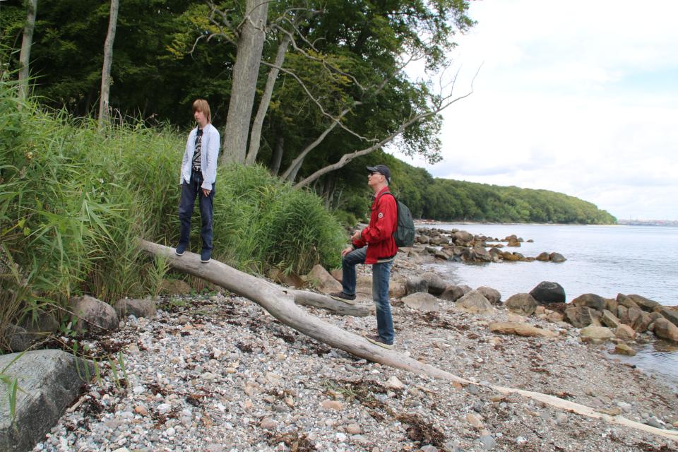 Тростник (дат. Tagrør, лат. Phragmites australis). Берег леса Марселисборг, Орхус, Дания. Фото 15 авг. 2021