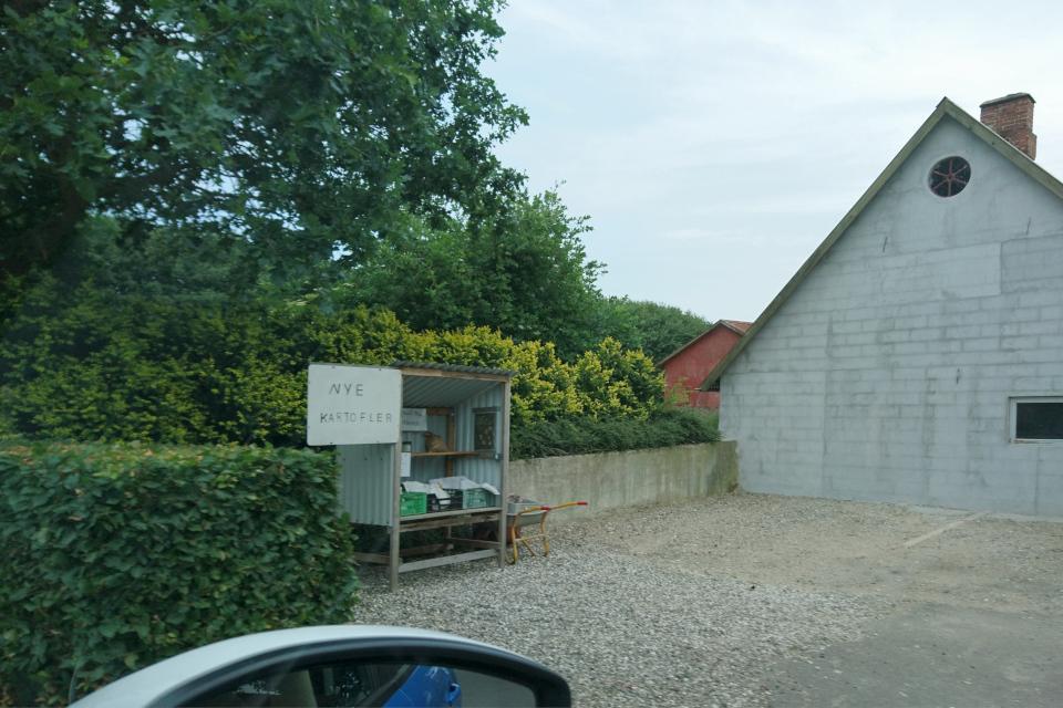 Картофель на продажу. Удбюхой (Udbyhøj, Havndal), Дания. Фото 28 июля 2021