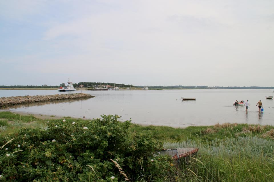 Фьорд. Удбюхой (Udbyhøj, Havndal), Дания. Фото 28 июля 2021