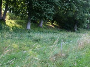 Холм средневековой крепости Скансен