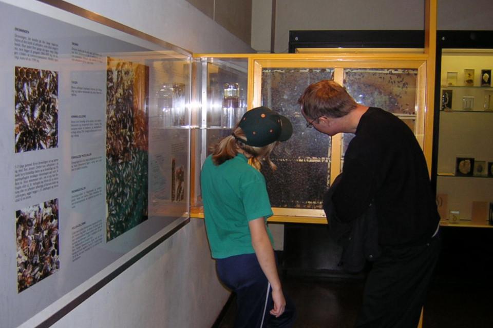 Екатерина Полякова, Пчелы. Музей естественной истории Орхус, Дания (Naturhistorisk Museum Aarhus). Фото 17 дек. 2004