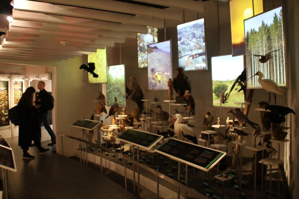 Музей естественной истории Орхус, Дания (Naturhistorisk Museum Aarhus). Фото 8 фев. 2019