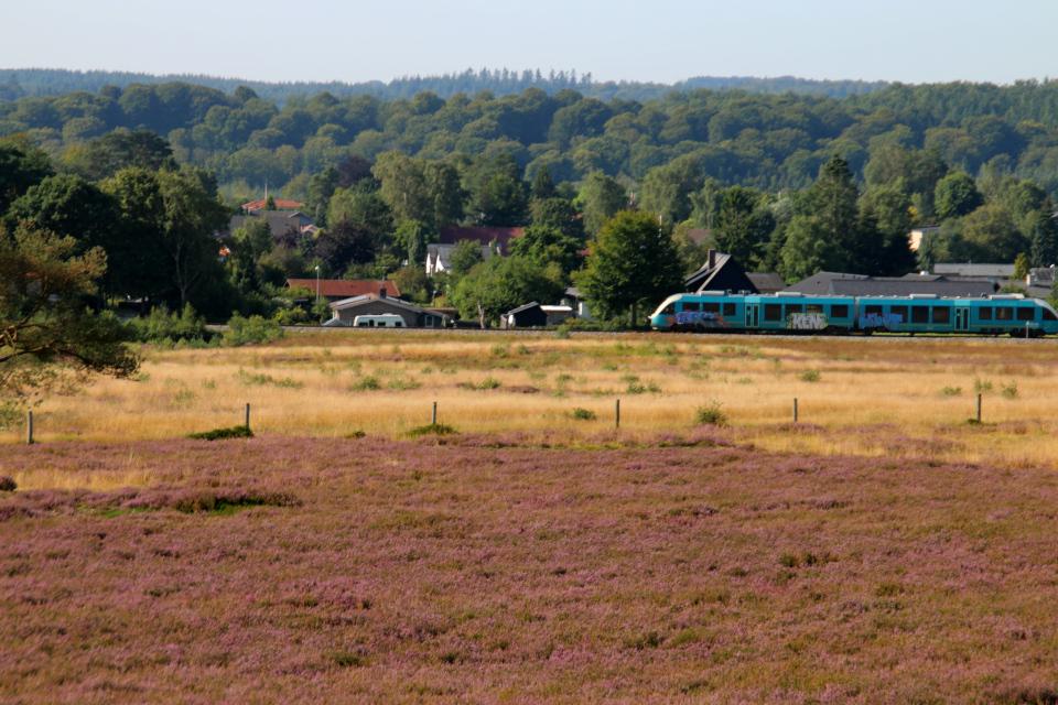 Поезд. Вересковые холмы Синдбьерг и Стоубьерг (Lyngbakke Sindbjerg Stovbjerg), Сайс-Свайбэк (Sejs-Svejbæk), Дания. Фото 23 авг. 2021