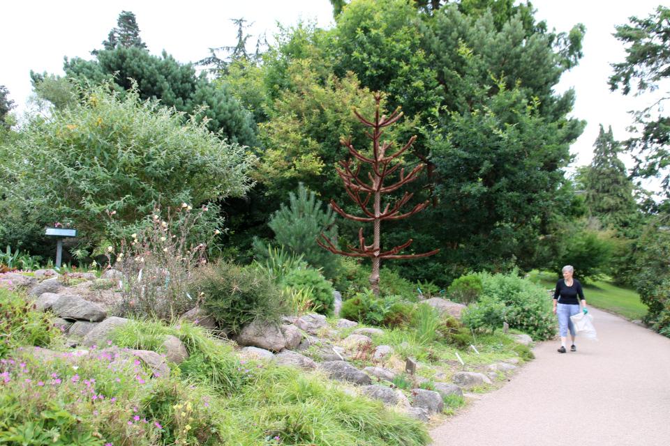 Волонтер в ботаническом сад г. Орхус, Дания. Фото 4 авг. 2021