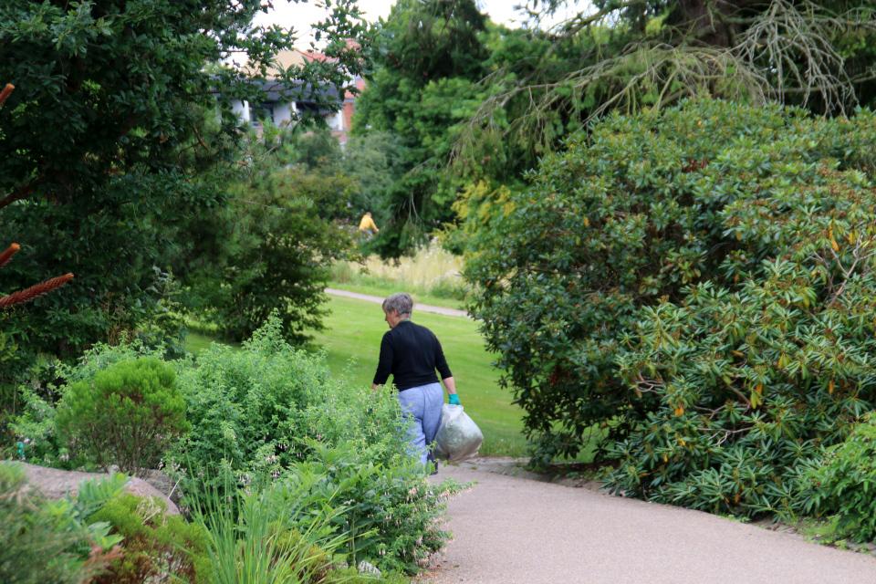 Волонтер ботанического сада г. Орхус, Дания. Фото 4 авг. 2021