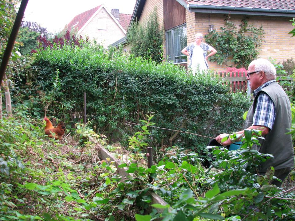 Йенс Кёэ в моем саду ловит курицу. Фото 28 авг. 2012, г. Хойбьерг, Дания