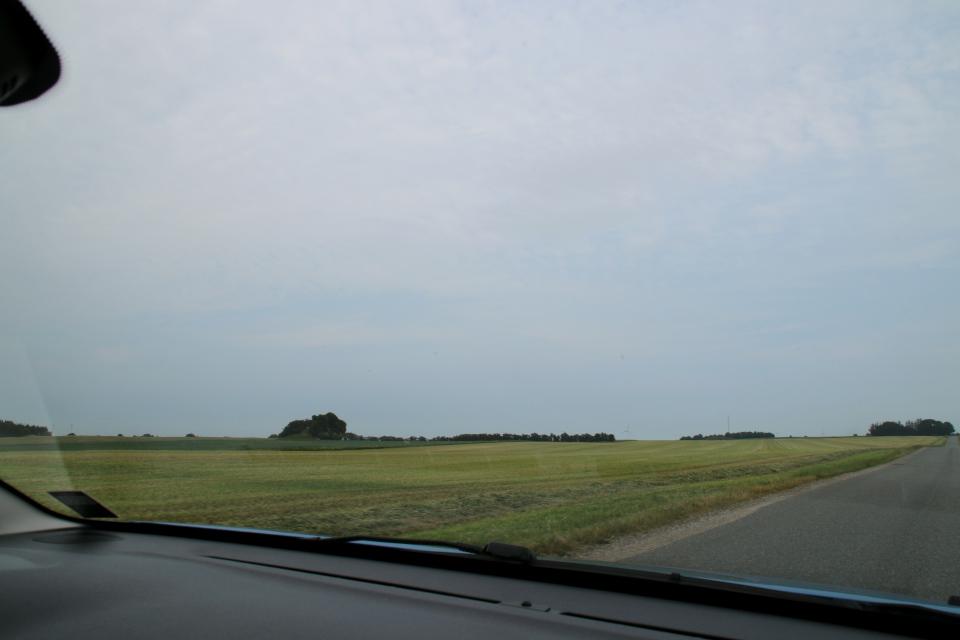 Курганы. Муниципалитет Рандерс, дорога к Удбюхой, Дания. Фото 28 июля 2021