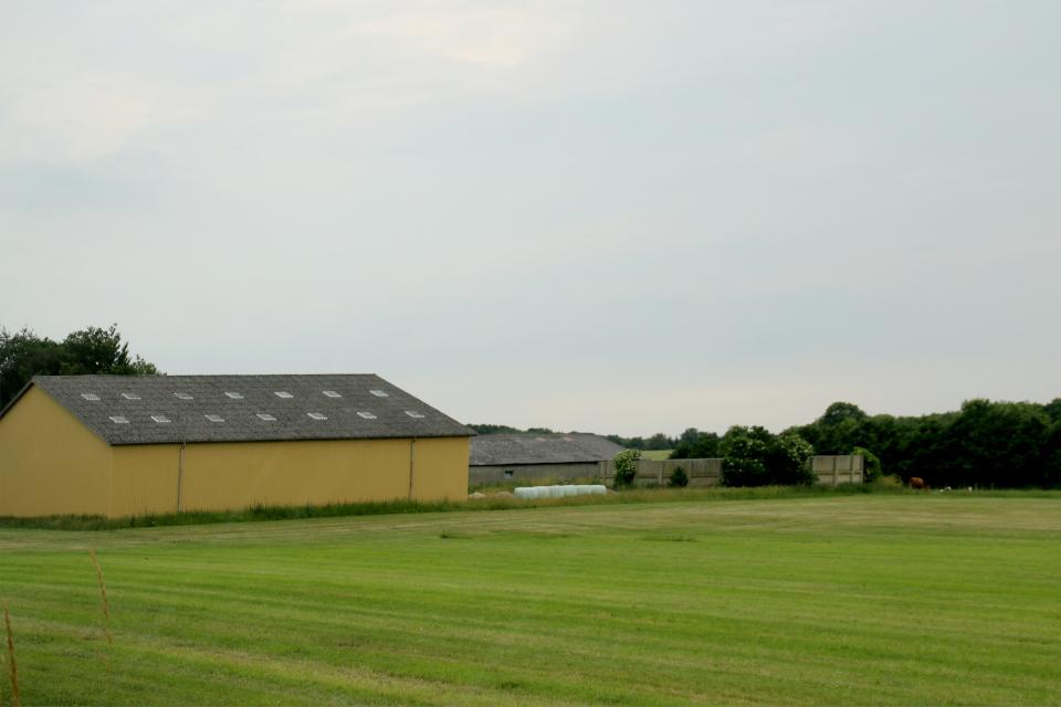 Свиноферма. Муниципалитет Рандерс, дорога к Удбюхой, Дания. Фото 28 июля 2021