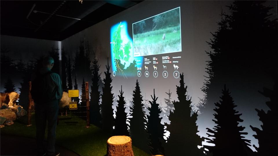 Выставка. Волки в Дании, музей естественной истории Орхус (Dansker med Ulve, Naturhistorisk Museum), Дания. Фото 29 авг. 2021