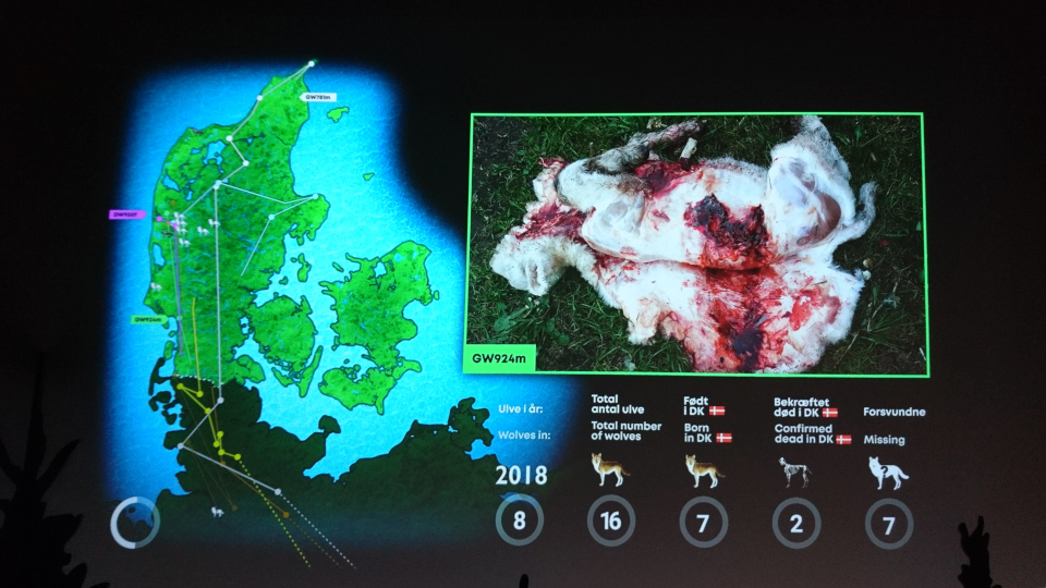 2018 - Волки в Дании, музей естественной истории Орхус (Dansker med Ulve, Naturhistorisk Museum), Дания. Фото 29 авг. 2021