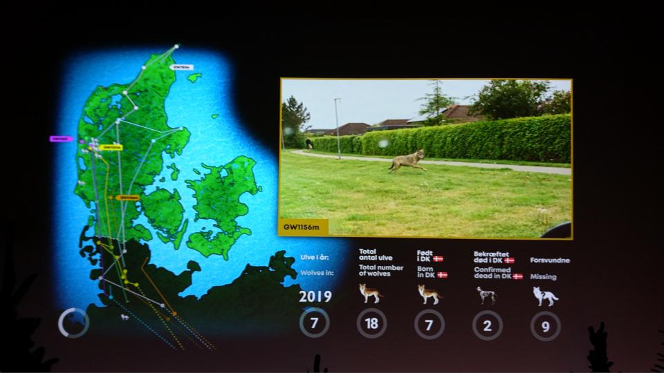 2019 - Волки в Дании, музей естественной истории Орхус (Dansker med Ulve, Naturhistorisk Museum), Дания. Фото 29 авг. 2021