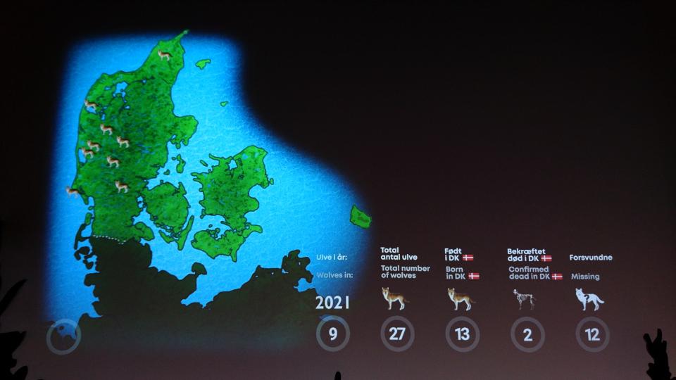 2021 - Волки в Дании, музей естественной истории Орхус (Dansker med Ulve, Naturhistorisk Museum), Дания. Фото 29 авг. 2021