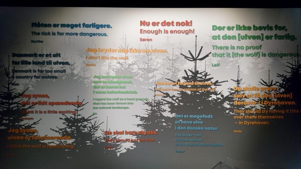 Волки в Дании, музей естественной истории Орхус (Dansker med Ulve, Naturhistorisk Museum), Дания. Фото 29 авг. 2021