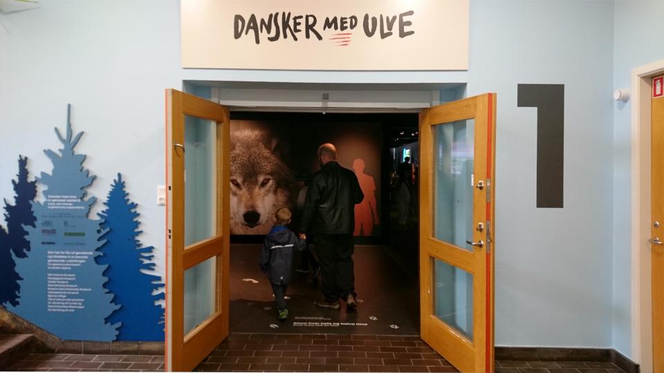 """""""Датчане и волки"""", выставка в музее естественной истории Орхус (Dansker med Ulve, Naturhistorisk Museum), Дания. Фото 29 авг. 2021"""