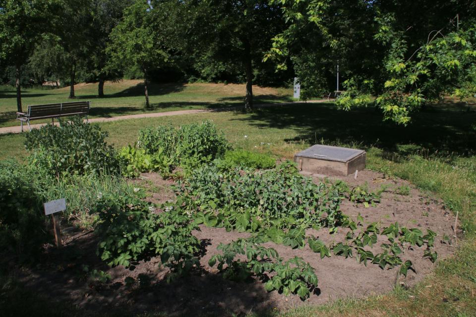 Городские огороды Марселисборг (Havefællesskabet i Marselisborg Hospitalspark), г. Орхус, Дания. Фото 12 июн. 2018