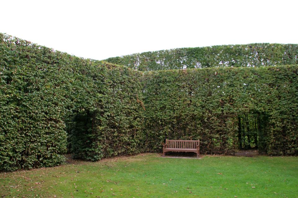Граб европейский, или граб кавказский, или граб обыкновенный (дат. avnbøg, лат. Carpinus betulus) Геометрическе сады в Хернинг (De Geometriske Haver Herning), Дания. Фото 14 сент. 2021