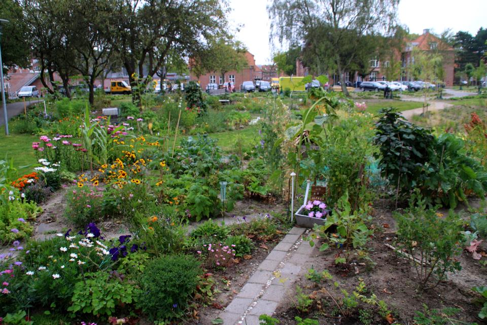 Цветы. Городские огороды. Дождевой парк Спарк (Spark rain park, Marselisborg center), Орхус, Дания. Фото 2 сент. 2021