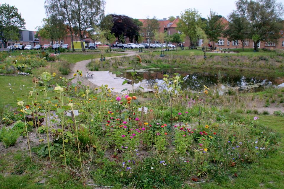 Городские огороды. Дождевой парк Спарк (Spark rain park, Marselisborg center), Орхус, Дания. Фото 2 сент. 2021