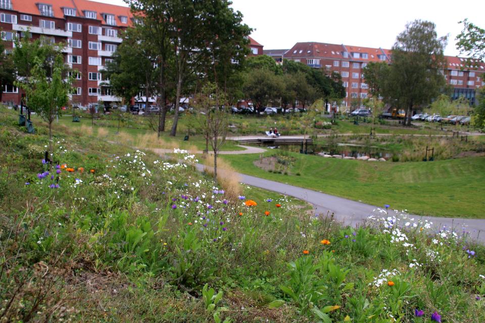 Экстремальный натурализм. Дождевой парк Спарк (Spark rain park, Marselisborg center), Орхус, Дания. Фото 2 сент. 2021