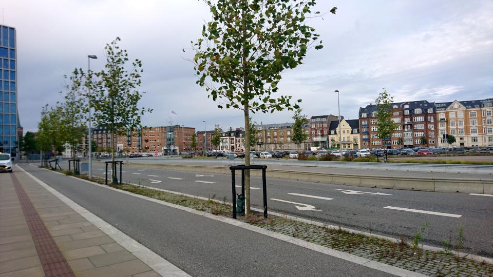 Bernhardt Jensens Boulevard, платановая аллея. Платан клёнолистный (дат. Almindelig platan, лат. Platanus × acerifolia).Орхус Доклендс (Aarhus Ø), Дания 29 сентября 2021
