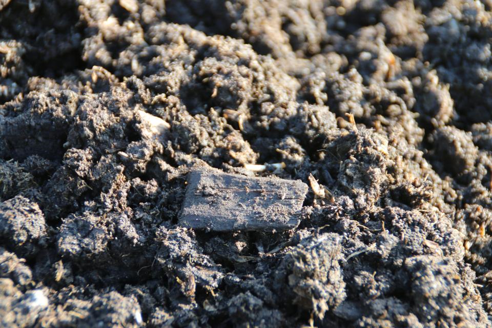 Щепа (hugspåner). Археологические раскопки Эскелунден (Eskelunden), Орхус, Дания. Фото 9 сент. 2021