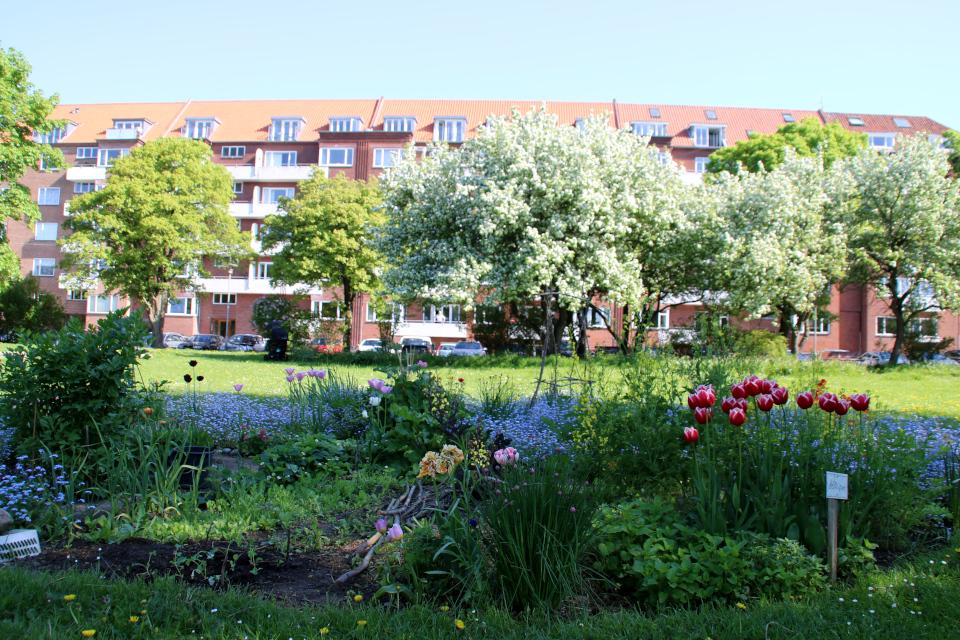 Городские огороды Марселисборг (Havefællesskabet i Marselisborg Hospitalspark), г. Орхус, Дания. Фото 15 мая 2018