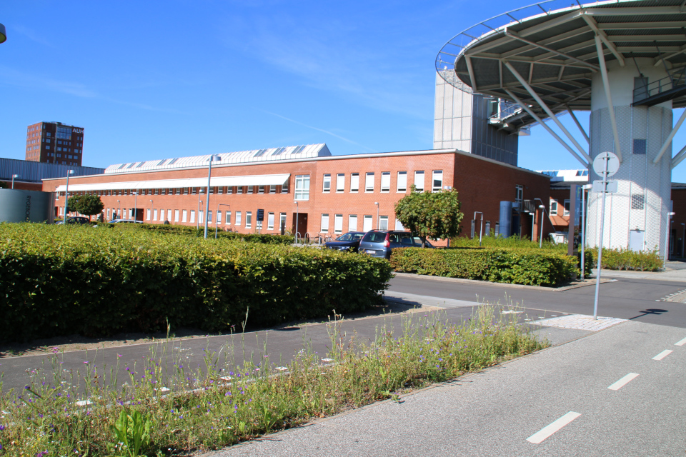Дикие растения. Форум - день открытых дверей (Forum - Åbent Hospital), Университетская больница Орхус, Дания. Фото 5 сент. 2021