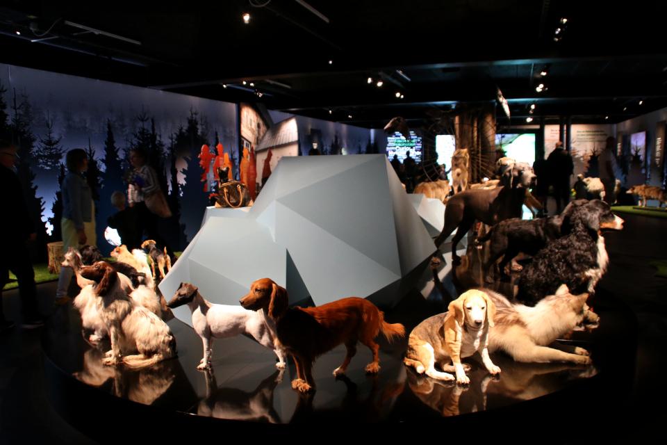 Фото 29 авг. 2021, музей естественной истории Орхус, Дания