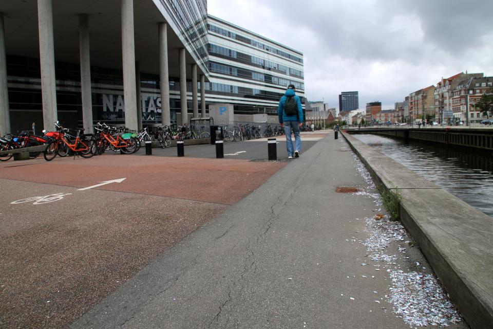 Ракушки мидий. Орхус Доклендс (Aarhus Ø), Дания 29 сентября 2021