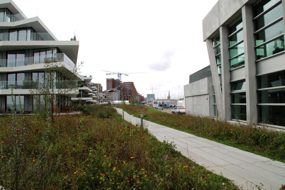 Клумба дикие растения. Орхус Доклендс 29 сентября 2021 (Aarhus Ø), Дания