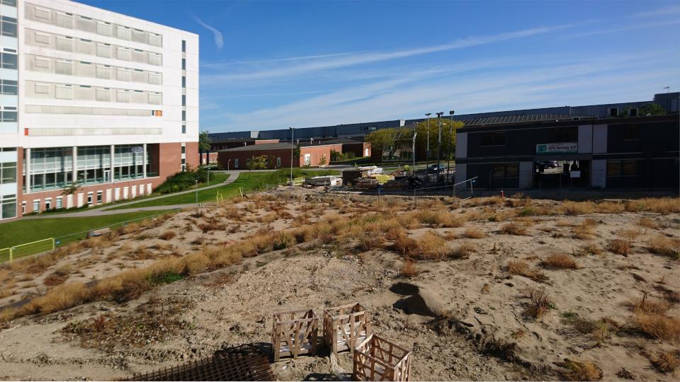 Холмы в парке. Диабетический центр. Форум - день открытых дверей (Forum - Åbent Hospital), Университетская больница Орхус, Дания. Фото 5 сент. 2021