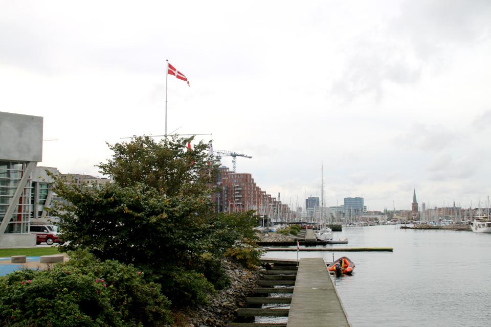 Rosa rugosa. Орхус Доклендс 29 сентября 2021 (Aarhus Ø), Дания
