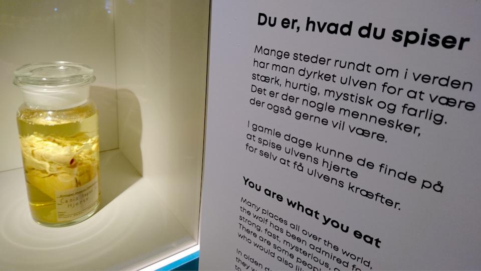 Мозг волка. Фото 29 авг. 2021, музей естественной истории Орхус, Дания