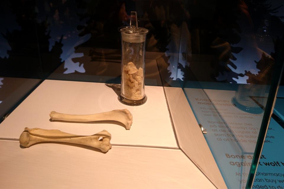 Кости, погрызанные волком. Фото 29 авг. 2021, музей естественной истории Орхус, Дания