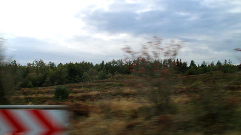 Верещатники. Курганы Мангехойе (Gravhøjene Mangehøje), Фото 25 сент. 2021