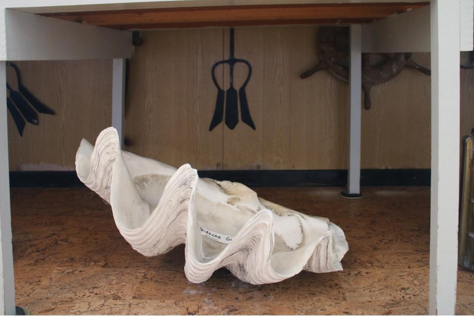 Гигантская тридакна (дат. Kæmpemusling, лат. Tridacna gigas). Дом с ракушками Тюборён (Sneglehuset, Thyborøn), Дания. Фото 26 сент. 2021