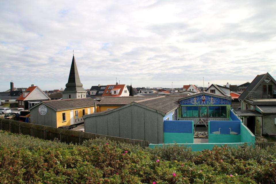 Шиповник морщинистый. Дом с ракушками Тюборён (Sneglehuset, Thyborøn), Дания. Фото 26 сент. 2021