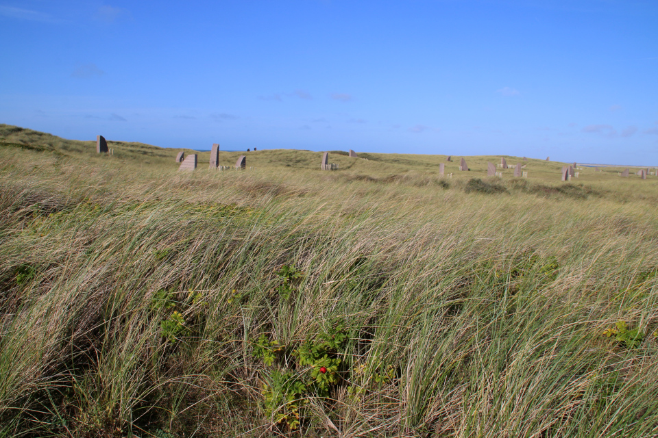 Морщинистый шиповник. Мемориальный парк Тюборён (Mindeparken Thyborøn), Дания. Фото 25 сент. 2021