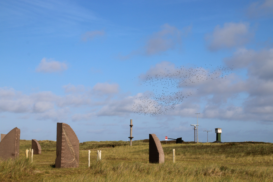 Скворцы. Мемориальный парк Тюборён (Mindeparken Thyborøn), Дания. Фото 25 сент. 2021