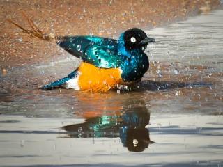 01 birds of Uganda 1 © Eric Colpaert